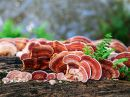 Houba REISHI BIO sušený prášek 100 g dlouhověkost,rakovina,nádory,játra,detoxikace,imunita,cholesterol,srdce,vitamin B